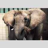 Elefanten /Elefant