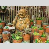 Blumen /Budda