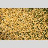 Herbstlaub /Ginkgo-Decke
