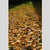 Herbstlaub /Lichtspiel