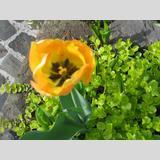 Garten /Mein schöner Garten