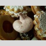 Süße Welt /Weihnachtsleckerei V Himbeertrüffel