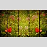 Formen und Farben III /Blüten auf Holztextur